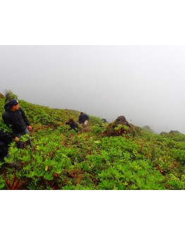 South of Basse Terre and volcano hike
