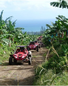 BUGGY TOUR IN THE SOUTH