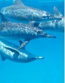 Cetacean watching