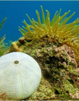 Le monde sous-marin en RANDONNEE PALMEE